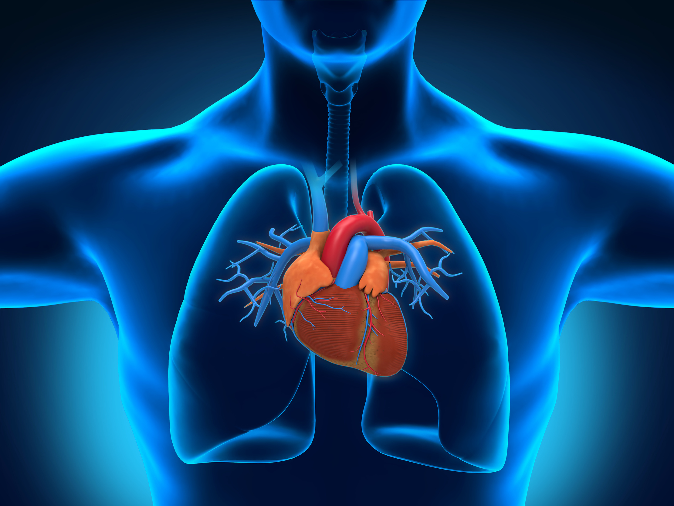 Cardiology Medical Billing and Coding Services in Florida, USA