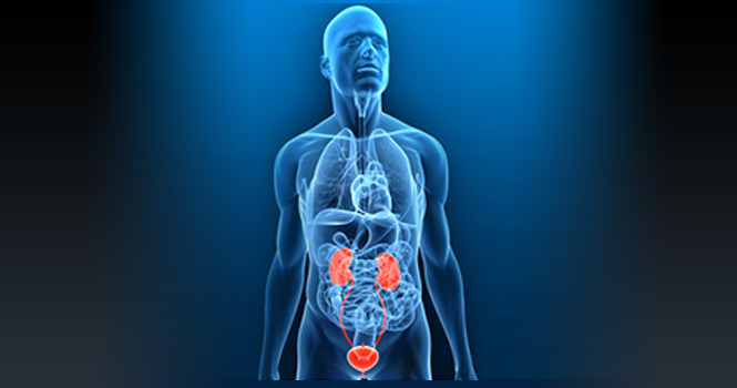 Urology Medical Billing and Coding Services in Florida, USA